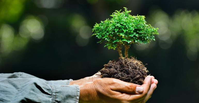 Image result for proper tree care